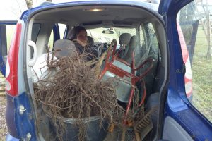 Auto voller Pflanzutensilien